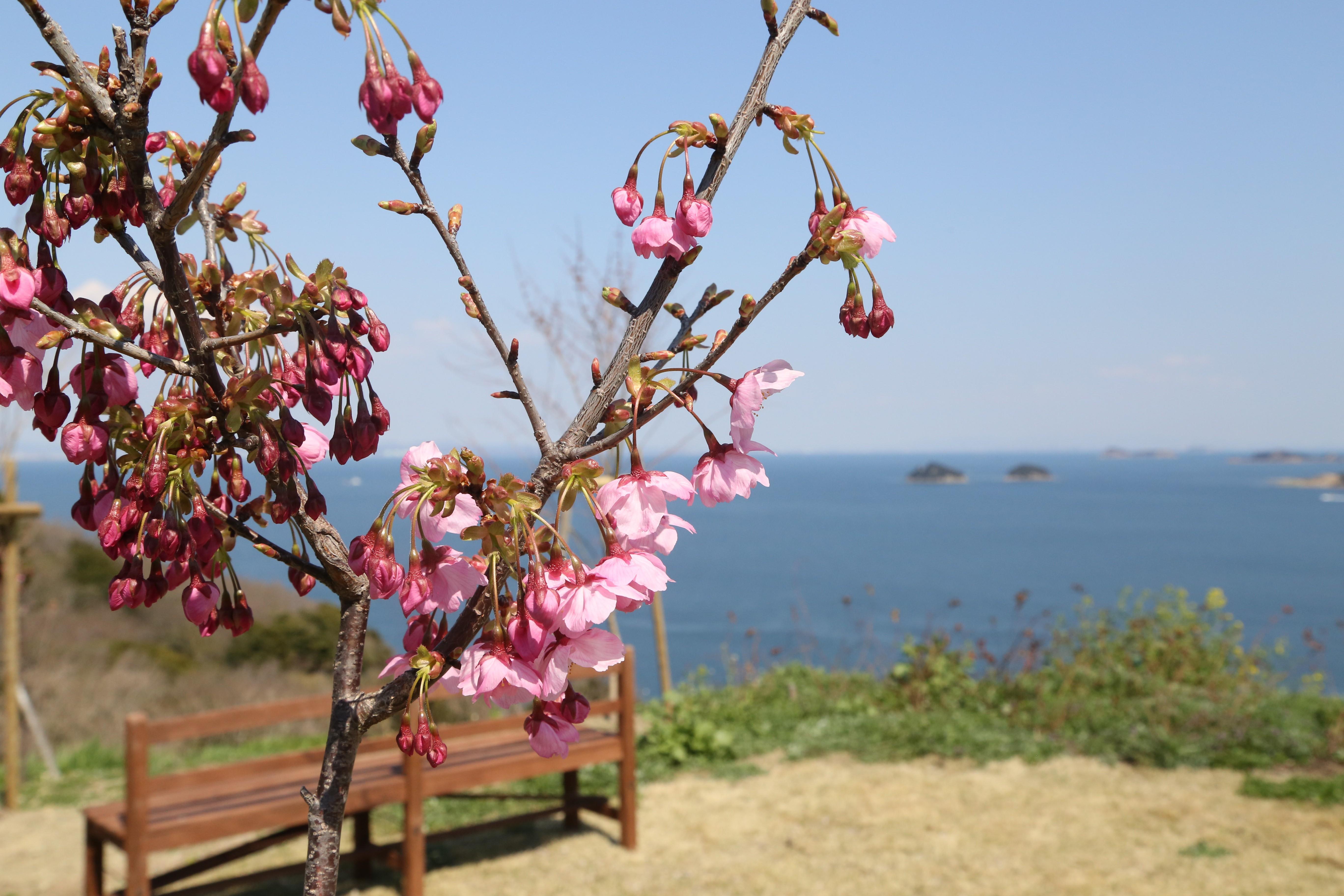 海を背景の花もいいですね!