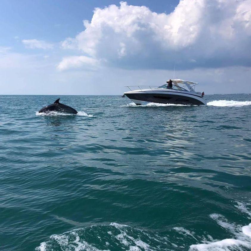 英国チャンネル諸島のジャージーにいる33Expressft。の友人たちの素晴らしいショットです。